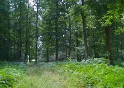Auszeit vom Alltag im Reinhardswald mit Ute Peppermüller - Impressionen 10