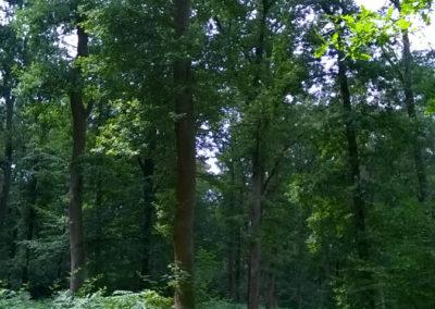 Auszeit vom Alltag im Reinhardswald mit Ute Peppermüller - Impressionen 11