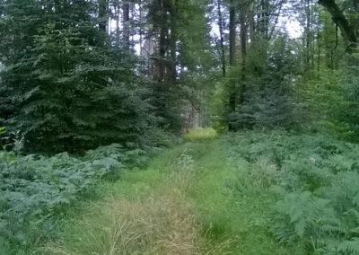 Auszeit vom Alltag im Reinhardswald mit Ute Peppermüller - Impressionen 5