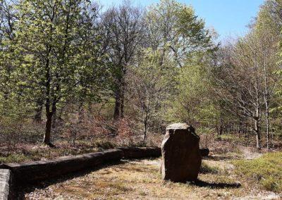 Auszeit vom Alltag im Wald mit Ute Peppermüller - Impressionen 1