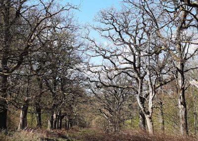 Auszeit vom Alltag im Wald mit Ute Peppermüller - Impressionen 3